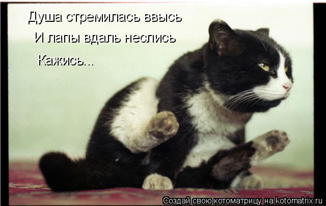 Котоматрица: Душа стремилась ввысь И лапы вдаль неслись Кажись...