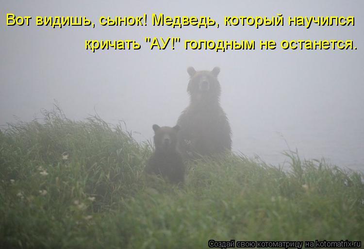 """Котоматрица: Вот видишь, сынок! Медведь, который научился  кричать """"АУ!"""" голодным не останется."""
