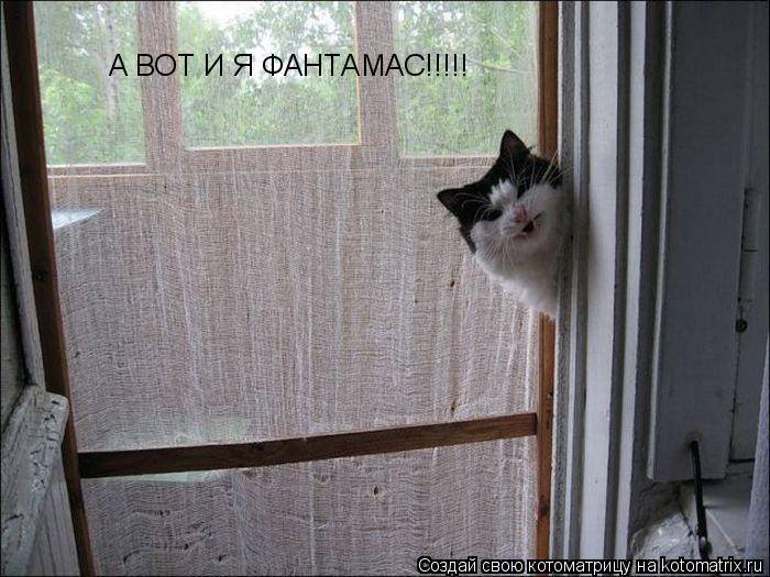 Котоматрица: А ВОТ И Я ФАНТАМАС!!!!!