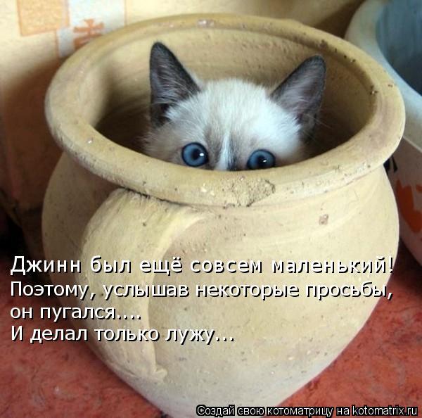 Котоматрица: Джинн был ещё совсем маленький!  Поэтому, услышав некоторые просьбы, он пугался..….  И делал только лужу..…