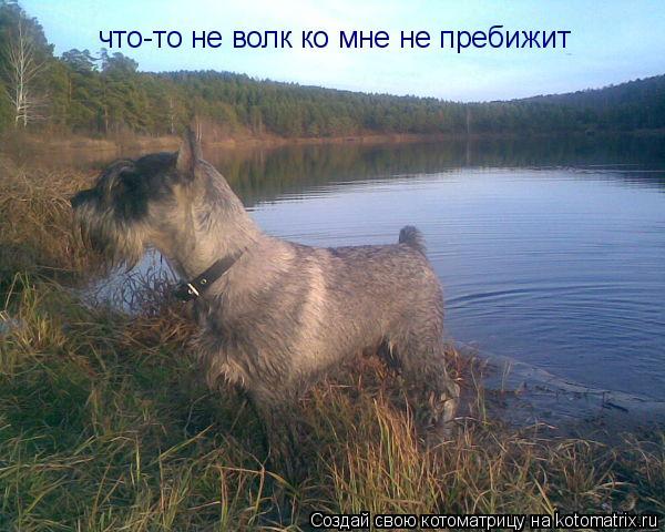 Котоматрица: что-то не волк ко мне не пребижит
