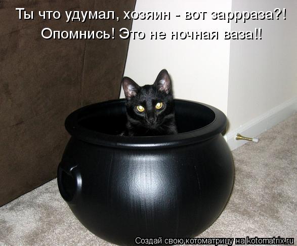 Котоматрица: Опомнись! Это не ночная ваза!! Ты что удумал, хозяин - вот заррраза?!