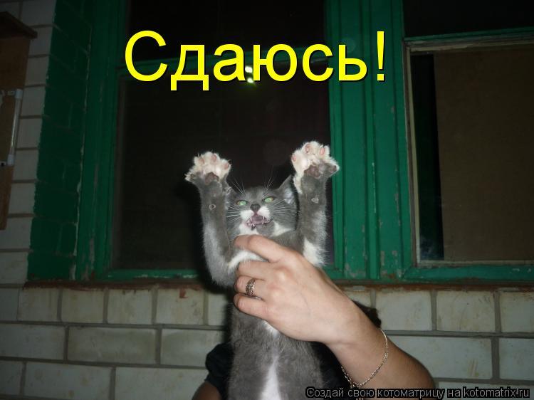 Котоматрица: Сдаюсь!
