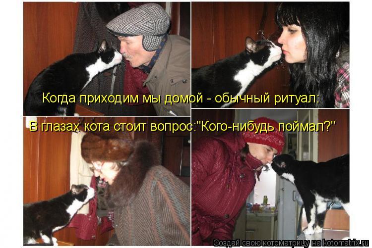 """Котоматрица: Когда приходим мы домой - обычный ритуал:  В глазах кота стоит вопрос:""""Кого-нибудь поймал?"""""""