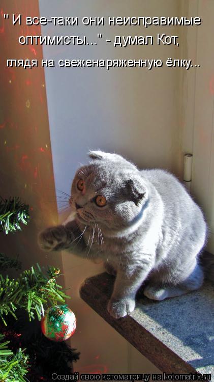 """Котоматрица: """" И все-таки они неисправимые оптимисты..."""" - думал Кот, глядя на свеженаряженную ёлку..."""