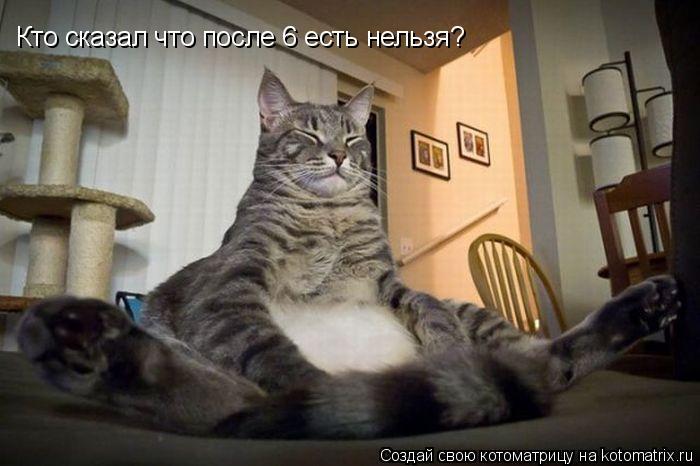 Котоматрица: Кто сказал что после 6 есть нельзя?
