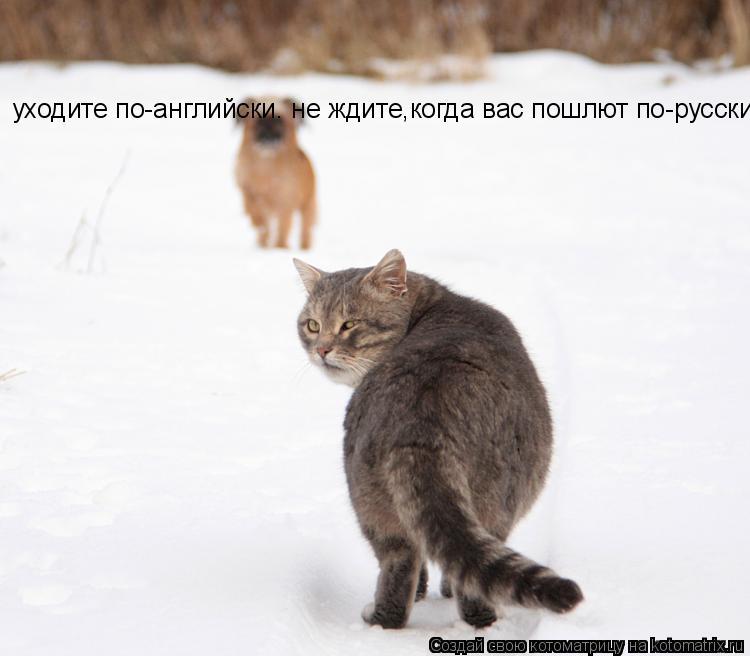 Котоматрица: уходите по-английски. не ждите,когда вас пошлют по-русски