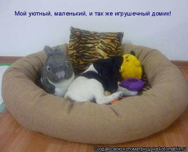 Котоматрица: Мой уютный, маленький, и так же игрушечный домик!