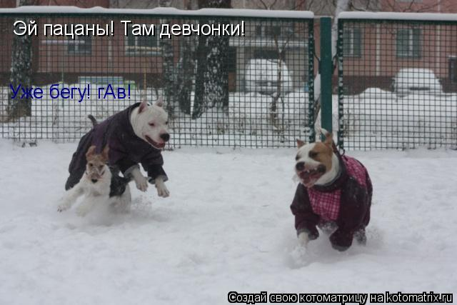 Котоматрица: Эй пацаны! Там девчонки! Уже бегу! гАв!