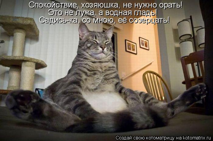 Котоматрица: Это не лужа, а водная гладь! Садись-ка, со мною, её созерцать!  Спокойствие, хозяюшка, не нужно орать!
