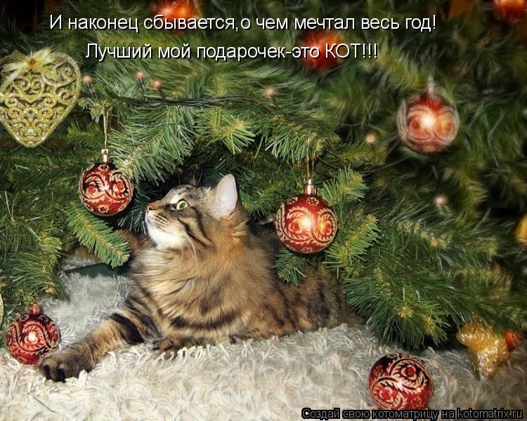 Котоматрица: И наконец сбывается,о чем мечтал весь год! Лучший мой подарочек-это КОТ!!!