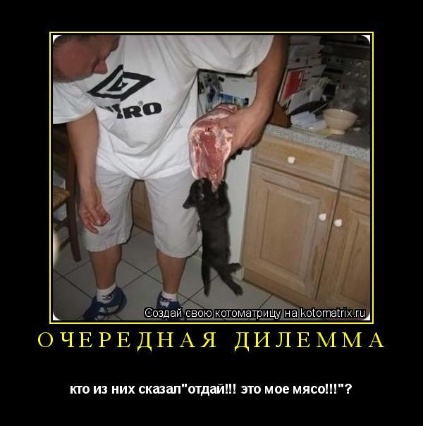 """Котоматрица: очередная дилемма кто из них сказал""""отдай!!! это мое мясо!!!""""?"""