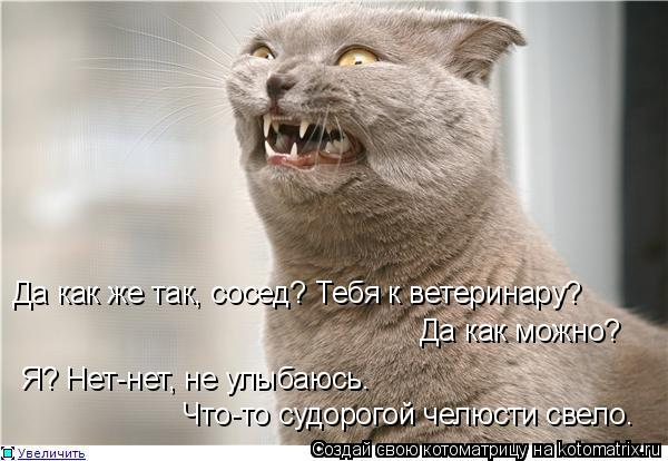 Котоматрица: Да как же так, сосед? Тебя к ветеринару? Да как можно? Я? Нет-нет, не улыбаюсь. Что-то судорогой челюсти свело.