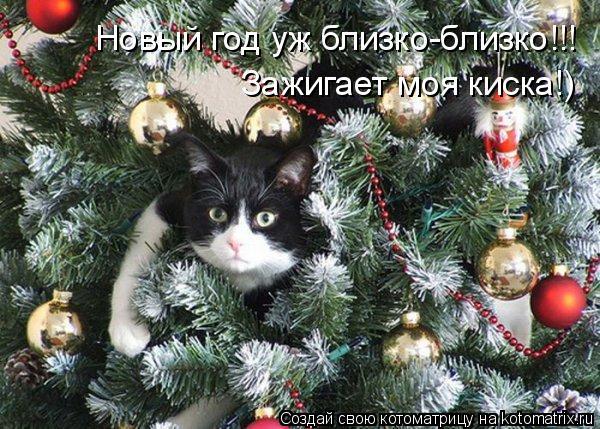 Котоматрица: Новый год уж близко-близко!!! Зажигает моя киска!)