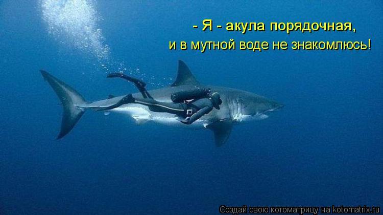Котоматрица: - Я - акула порядочная, и в мутной воде не знакомлюсь!