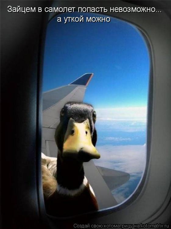 Котоматрица: Зайцем в самолет попасть невозможно... а уткой можно