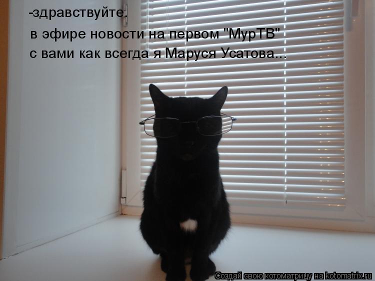 """Котоматрица: в эфире новости на первом """"МурТВ"""" -здравствуйте. с вами как всегда я Маруся Усатова..."""