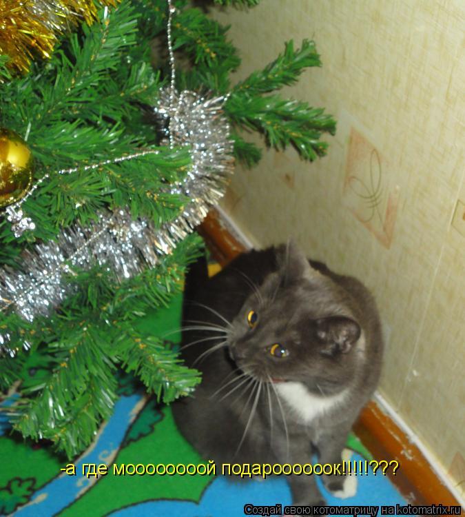 Котоматрица: -а где моооооооой подароооооок!!!!!???