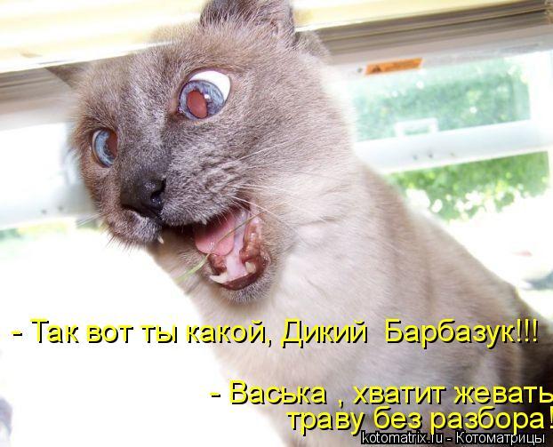 Котоматрица: - Так вот ты какой, Дикий  Барбазук!!! - Васька , хватит жевать траву без разбора!