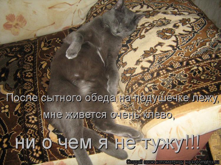 Котоматрица: После сытного обеда на подушечке лежу, мне живется очень клево, ни о чем я не тужу!!!