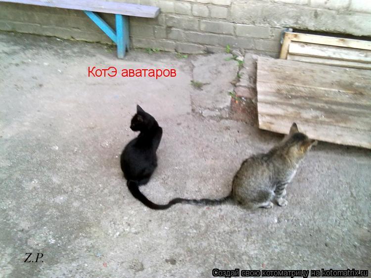 Котоматрица: КотЭ аватаров