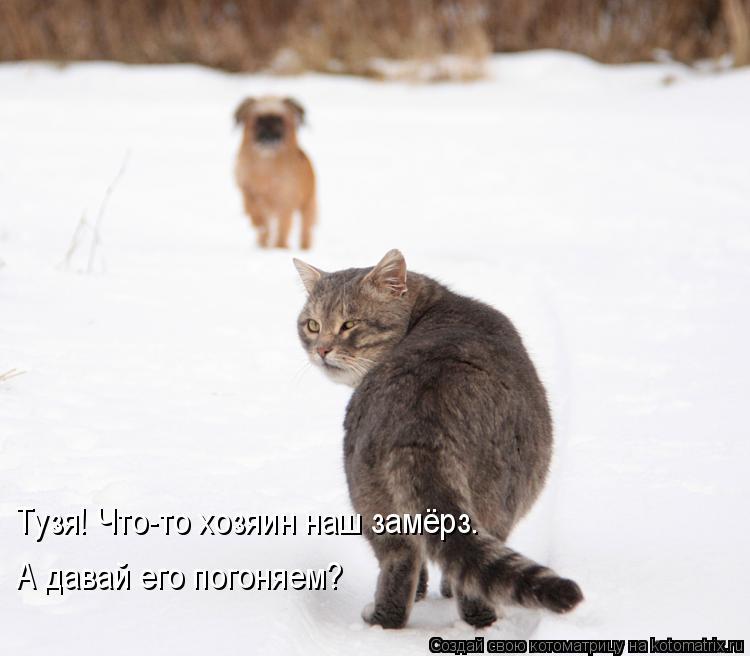 Котоматрица: Тузя! Что-то хозяин наш замёрз. А давай его погоняем?