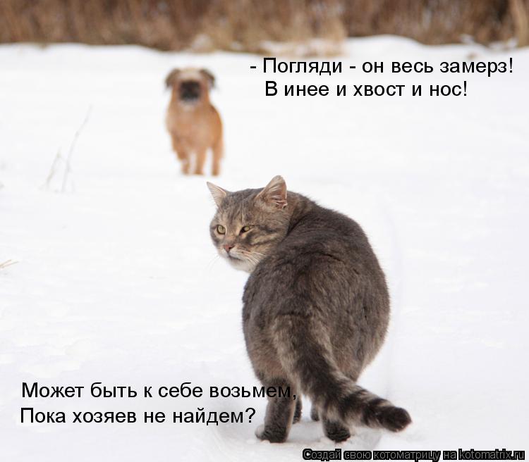 Котоматрица: Пока хозяев не найдем? - Погляди - он весь замерз! В инее и хвост и нос!  Может быть к себе возьмем,