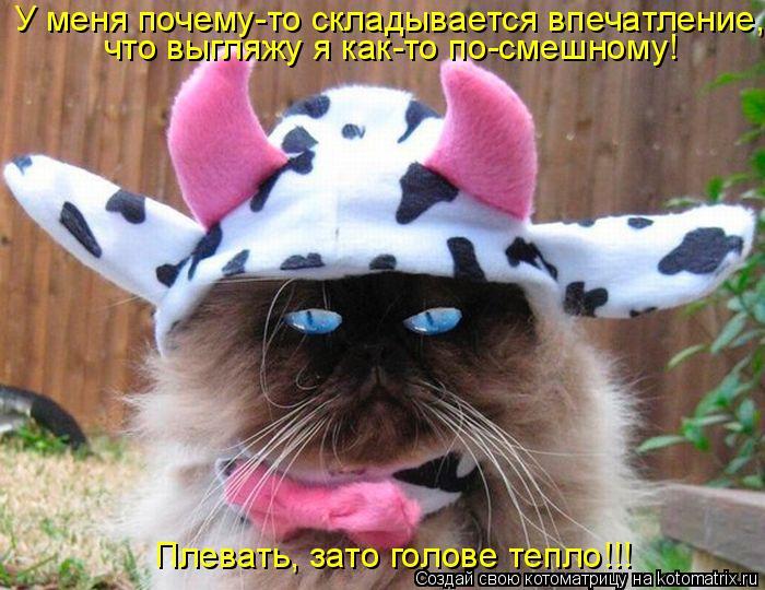 Котоматрица: Плевать, зато голове тепло!!! У меня почему-то складывается впечатление, что выгляжу я как-то по-смешному!