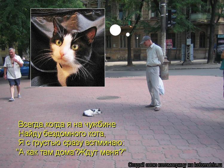 """Котоматрица: """"А как там дома?Ждут меня?"""" Я с грустью сразу вспминаю: Найду бездомного кота, Всегда,когда я на чужбине"""