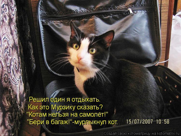 """Котоматрица: """"Бери в багаж!""""-мурлыкнул кот. Решил один я отдыхать. Как это Мурзику сказать? """"Котам нельзя на самолёт!"""""""