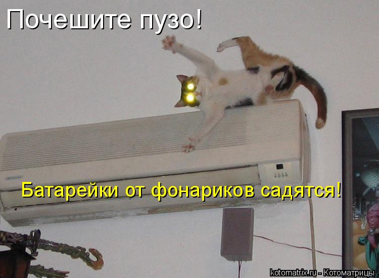 Котоматрица: Почешите пузо! Батарейки от фонариков садятся!