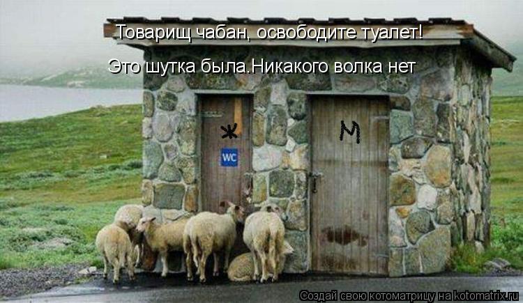 Котоматрица: Товарищ чабан, освободите туалет!  Это шутка была.Никакого волка нет
