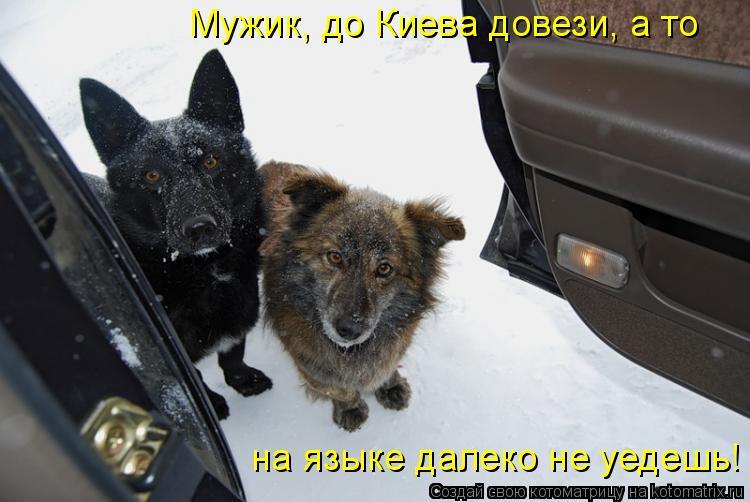 Котоматрица: Мужик, до Киева довези, а то  на языке далеко не уедешь!