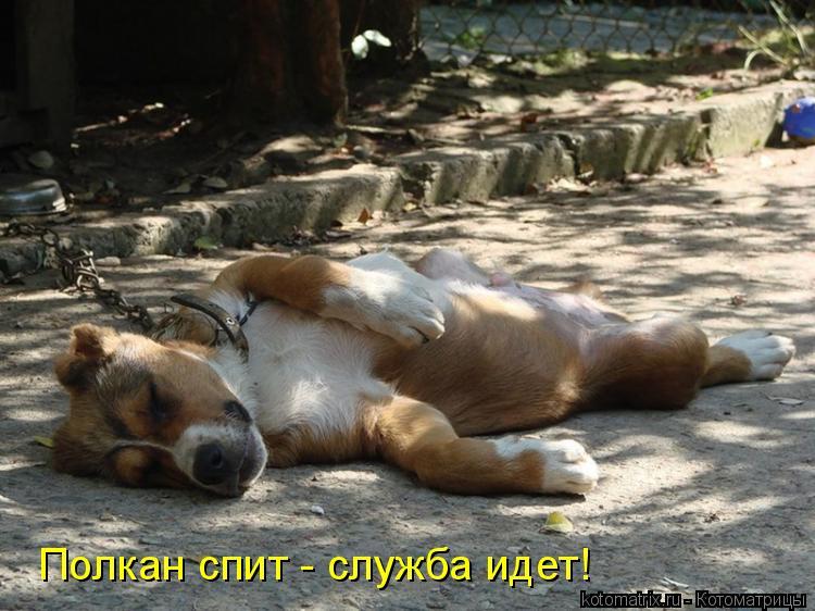 Котоматрица: Полкан спит - служба идет!
