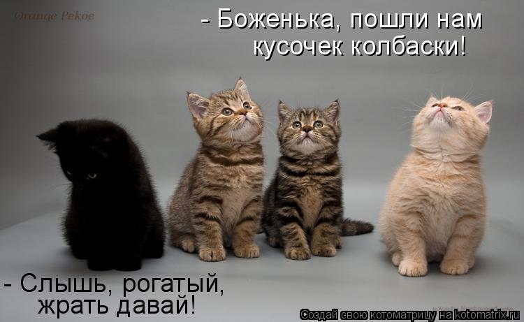 Котоматрица: кусочек колбаски! - Боженька, пошли нам  - Слышь, рогатый,  жрать давай!