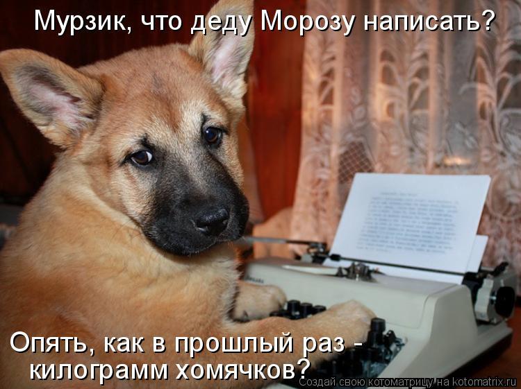 Котоматрица: Мурзик, что деду Морозу написать?  Опять, как в прошлый раз -  килограмм хомячков?