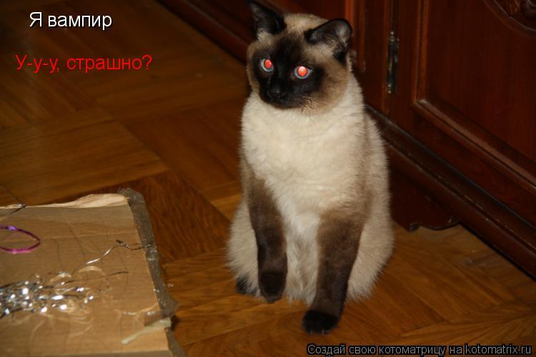 Котоматрица: Я вампир  У-у-у, страшно?