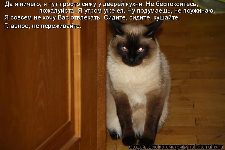Котоматрица: Да я ничего, я тут просто сижу у дверей кухни. Не беспокойтесь,  пожалуйста. Я утром уже ел. Ну подумаешь, не поужинаю. Я совсем не хочу Вас отв