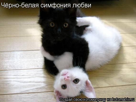 Котоматрица: Чёрно-белая симфония любви