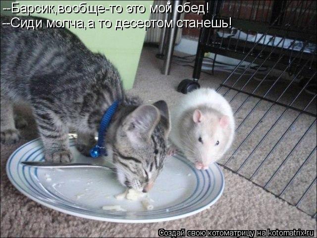 Котоматрица: --Барсик,вообще-то это мой обед! --Сиди молча,а то десертом станешь!
