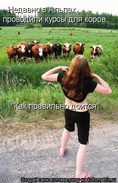 """Котоматрица: Недавно в Альпах проводили курсы для коров... """"Как правильно доится"""""""