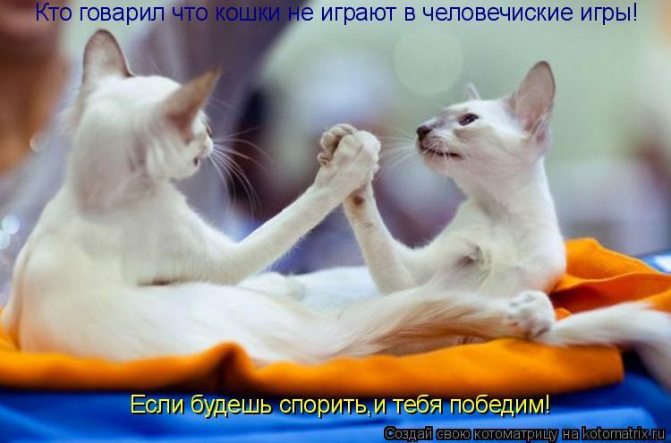 Котоматрица: Кто говарил что кошки не играют в человечиские игры! Если будешь спорить,и тебя победим!