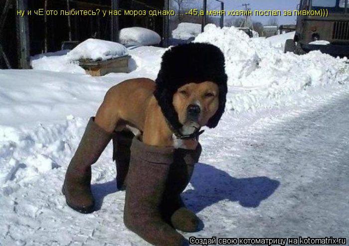 Котоматрица: ну и чЕ ото лыбитесь? у нас мороз однако.... -45,а меня хозяин послал за пивком)))