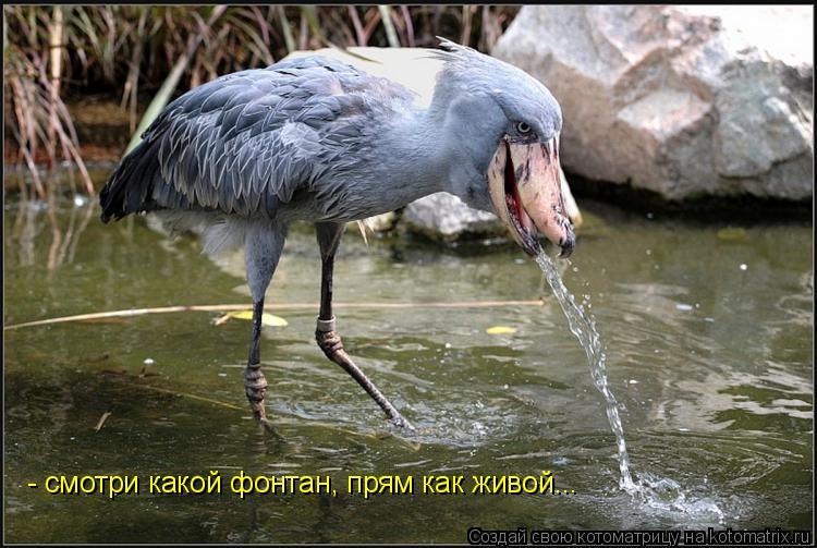 Котоматрица: - смотри какой фонтан, прям как живой...