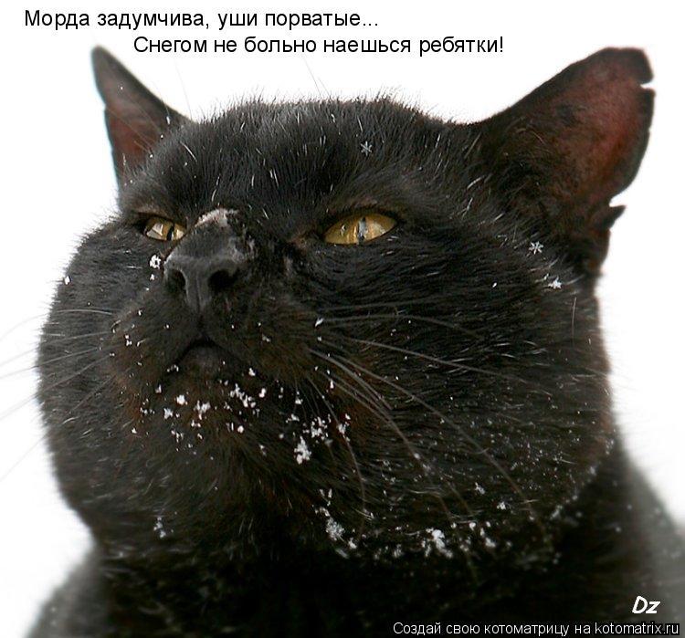 Котоматрица: Морда задумчива, уши порватые... Снегом не больно наешься ребятки!