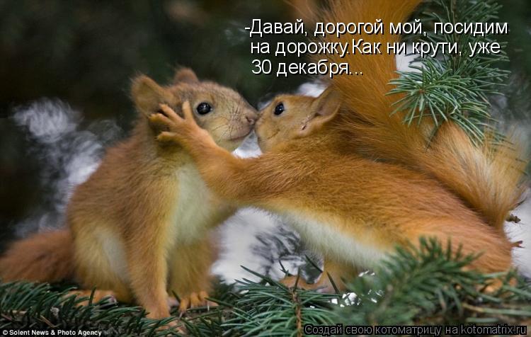 Котоматрица: -Давай, дорогой мой, посидим на дорожку.Как ни крути, уже  30 декабря...