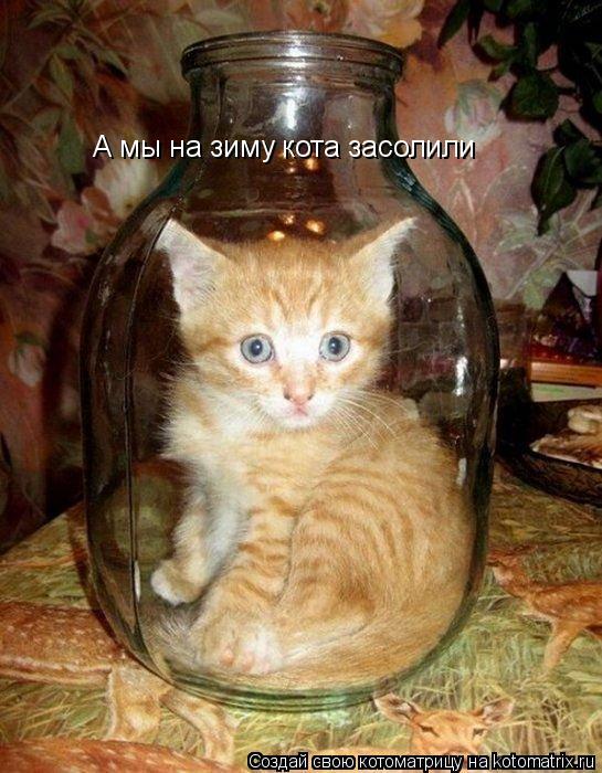 Котоматрица: А мы на зиму кота засолили