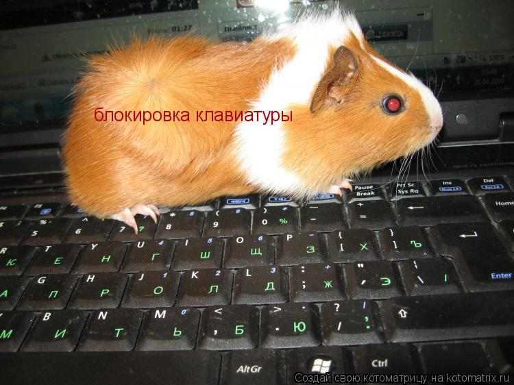 Котоматрица: блокировка клавиатуры