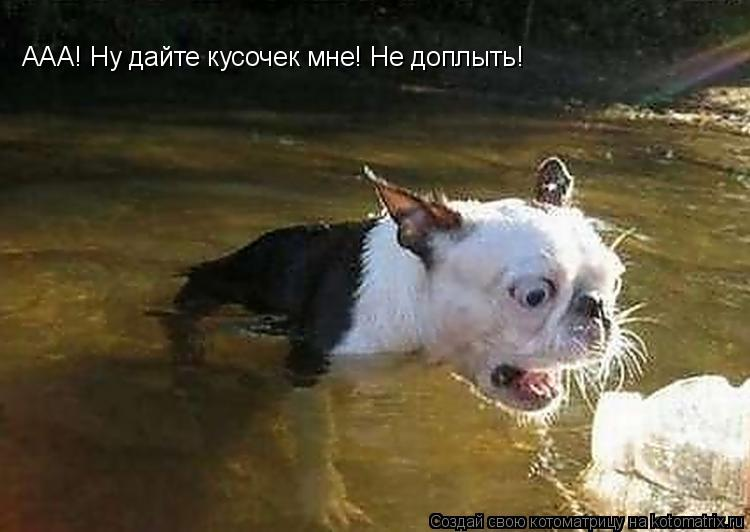 Котоматрица: ААА! Ну дайте кусочек мне! Не доплыть!