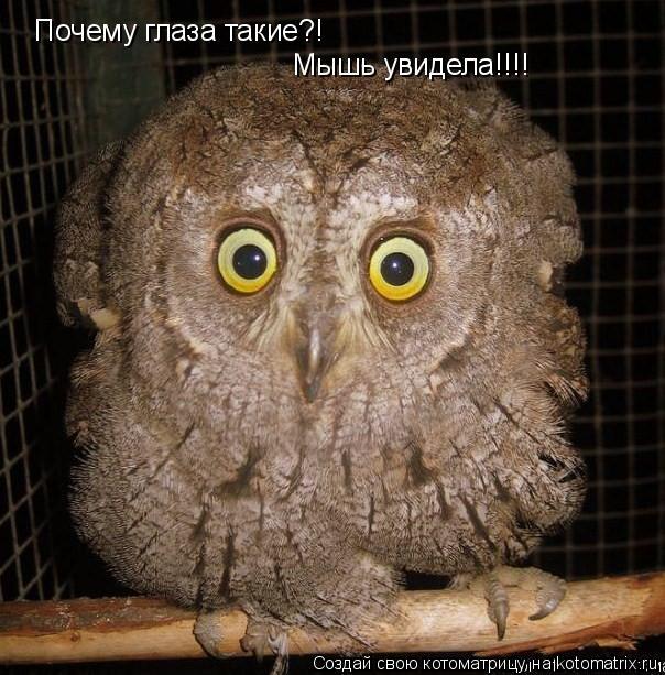 Котоматрица: Почему глаза такие?! Мышь увидела!!!!